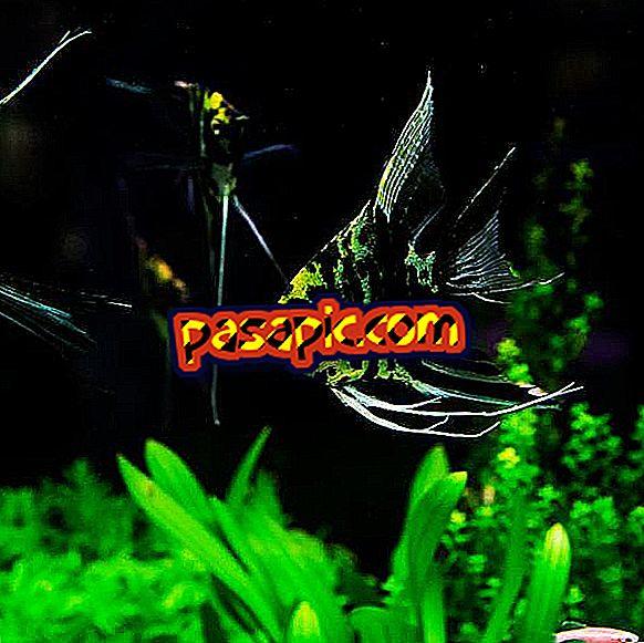 Wie man Pflanzen für ein Aquarium auswählt