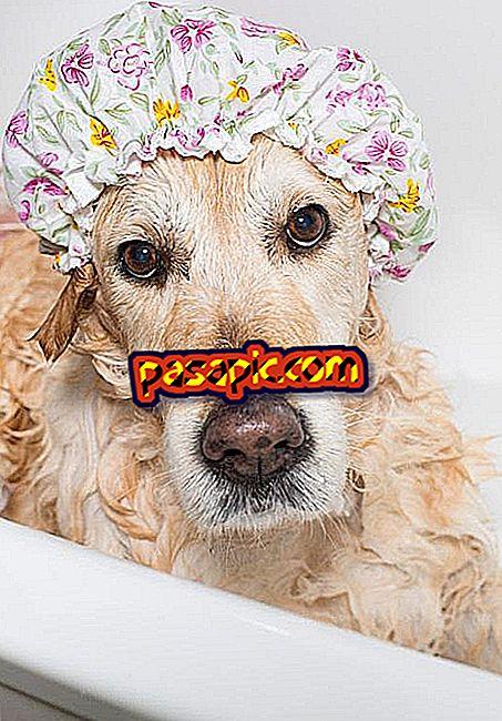 私の犬を浸す頻度 - マスコット