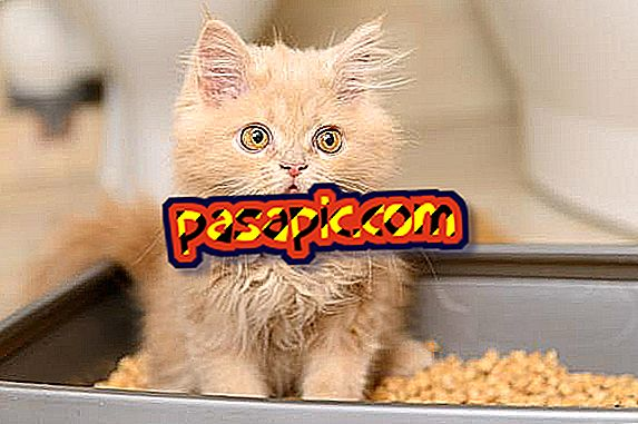 5 breeds of small cats - mascots