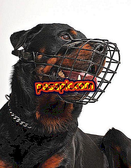 Quando mettere la museruola a un cane