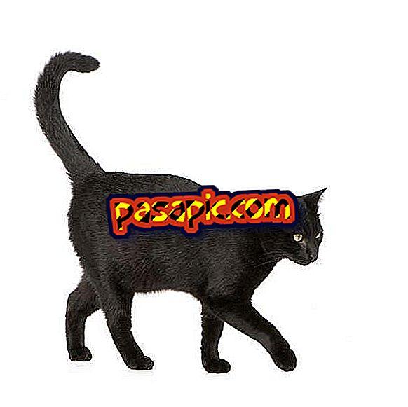 猫が尾を膨らませる理由