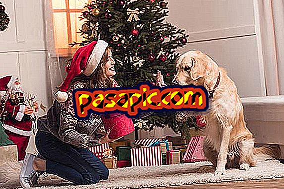 +10 Christmas gifts for my dog ​​- original and pretty ideas - mascots