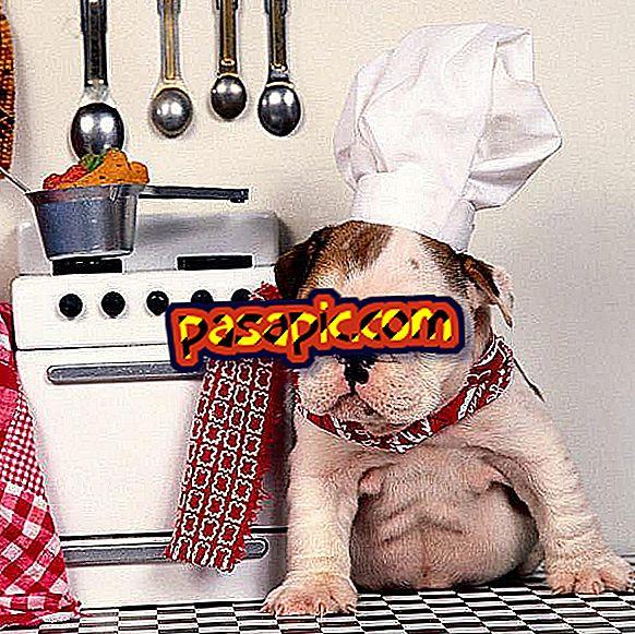 Verdure che i cani non dovrebbero mangiare