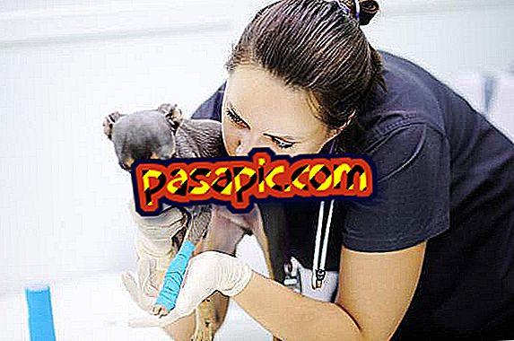 Come guarire le ferite dei cani con lo zucchero