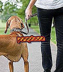 كيفية المشي كلبي