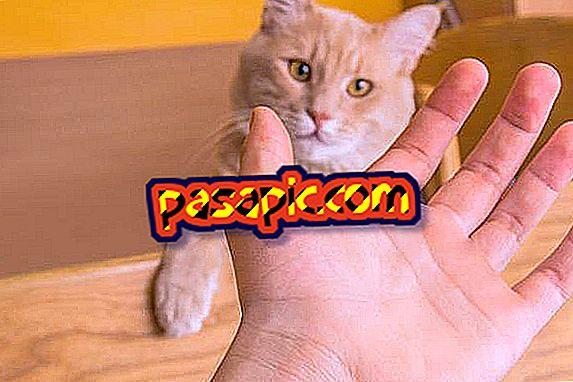 การเยียวยาที่บ้านสำหรับรอยขีดข่วนแมว