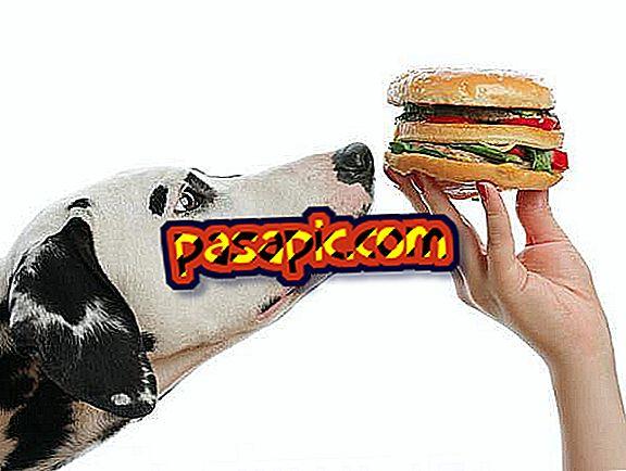क्या कुत्ते रोटी खा सकते हैं?