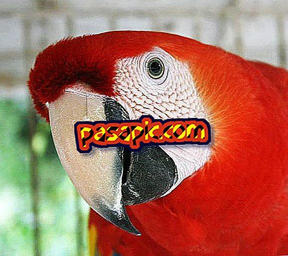 Kako natjerati mog papiga da govori