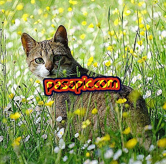 Какие токсичные растения для кошек