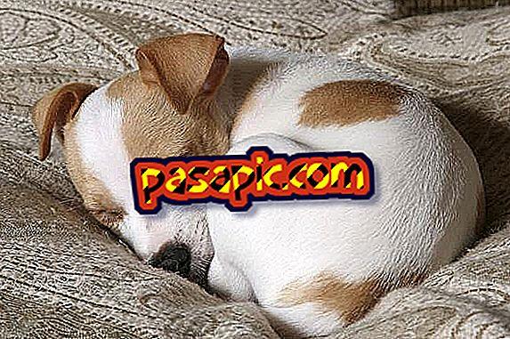 Come far dormire un cucciolo tutta la notte