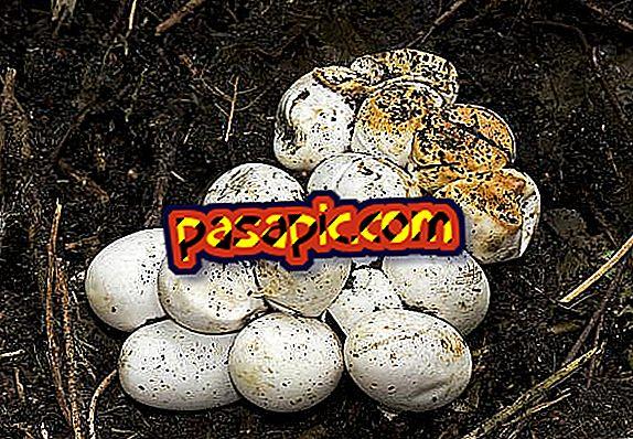 كيفية التعرف على ثعبان البيض