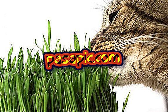 猫は草をどうやって使うの?