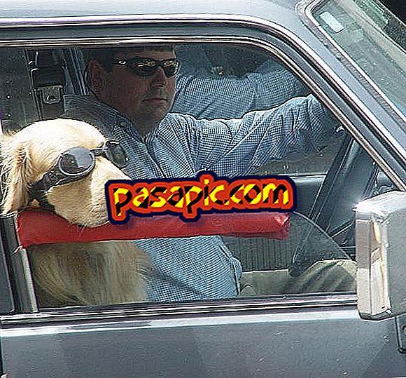 Kako se izogniti vrtoglavosti psa, ko potujete z avtomobilom