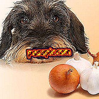Zašto psi ne mogu jesti luk