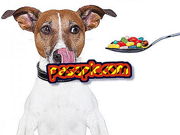 6 vitamins for dogs - mascots