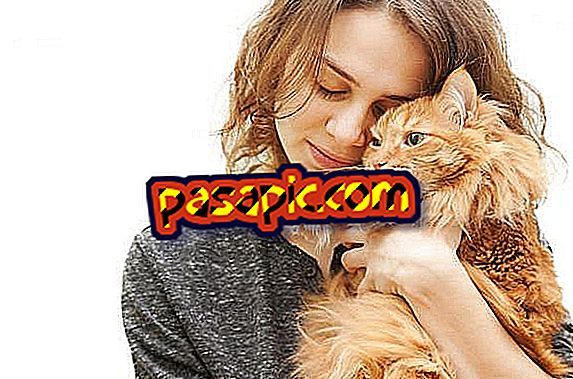 10 signs that my cat loves me - mascots