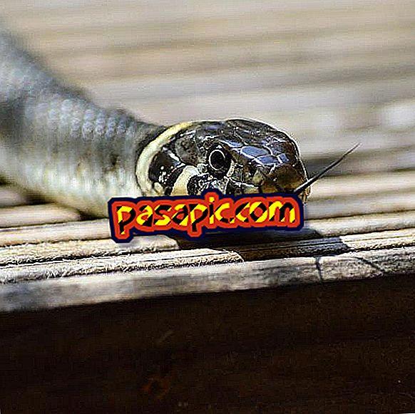 Qual è il serpente più velenoso del mondo