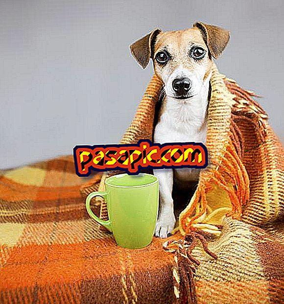 Как защитить собаку от холода