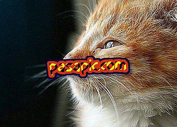 Bolehkah saya memberikan ibuprofen kepada kucing saya?  - Di sini jawapannya