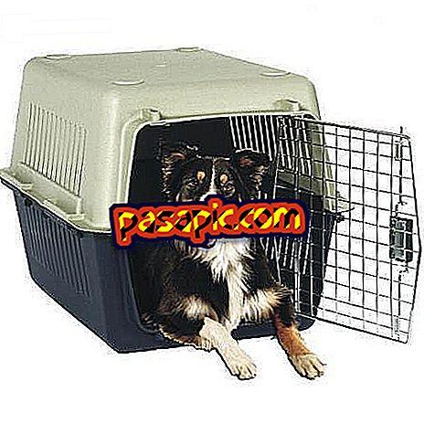 Làm thế nào để đi du lịch với con chó của tôi trên thuyền