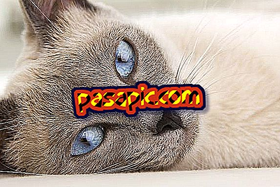 Apakah tanda-tanda kucing yang tertekan?