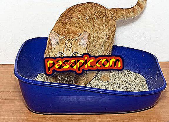 Kodėl mano katė nenaudoja smėlio dėžės