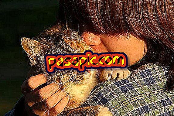 Kaj so najbolj ljubeče mačke